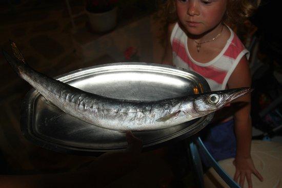 Nikos the Fisherman: Из этой рыбины нам суп приготовили.