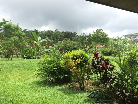Volcano Lodge & Springs : Our back patio view