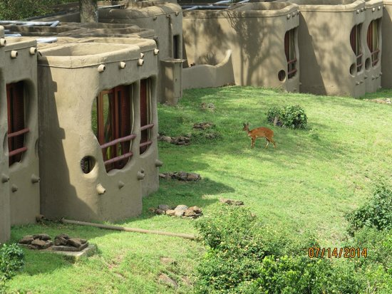 Mara Serena Safari Lodge: Outside room