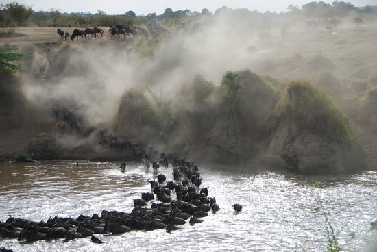 Mara Serena Safari Lodge: River crossing