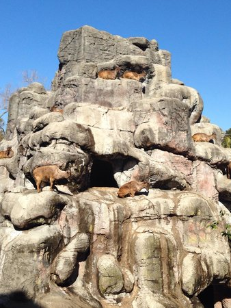 Taronga Zoo: Himalayan thar