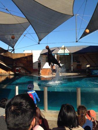 Taronga Zoo : Seal show a must go!