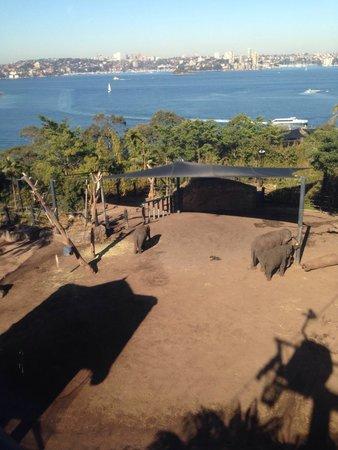 Taronga Zoo : Elephants