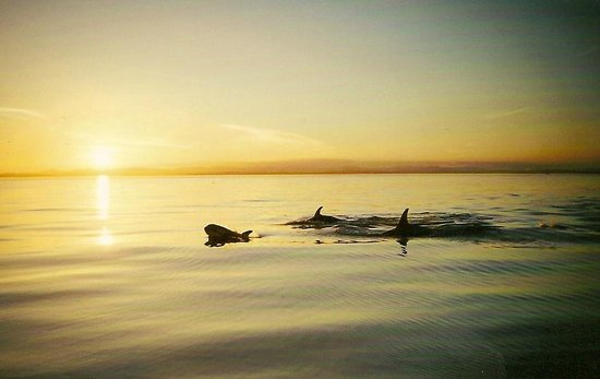 Sea King Adventures: Sunset Orcas