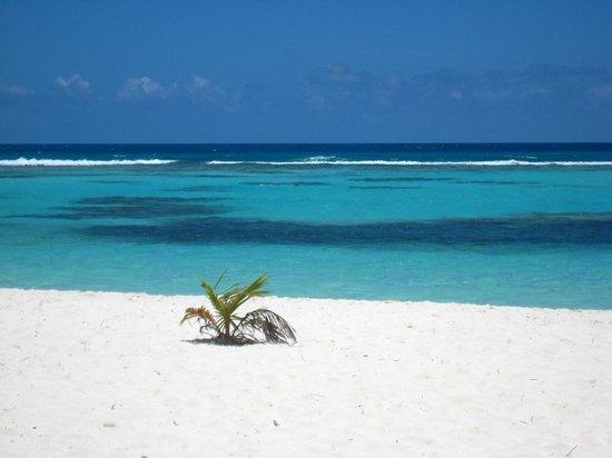 Isla Saona: spiaggia