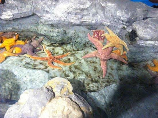 Shedd Aquarium : Loved touching the starfish