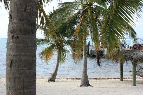 Little Cayman Beach Resort: View from beach