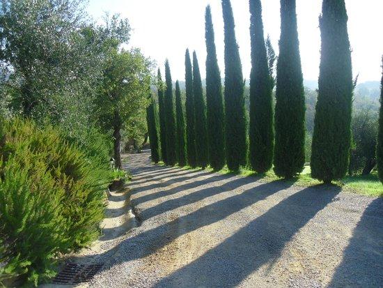 Casa Cornacchi Country House: Private Road leading up to Casa Cornacchi