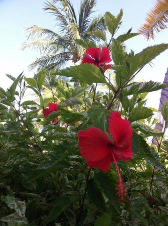 Little Cayman Beach Resort: Flowers outside of Room