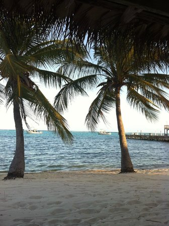 Little Cayman Beach Resort: View from Beach towards Boat Dock