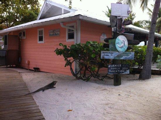 Little Cayman Beach Resort: Backside of Bar