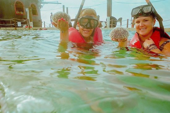 Ocean Adventures Stingray Bay Caribbean Festival : Found an urchin while swimming with the nurse sharks!