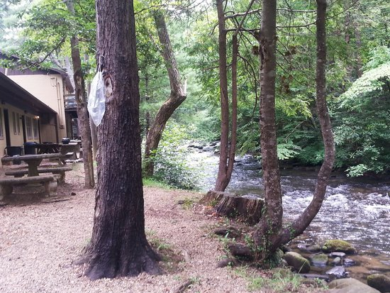 Green Cove Motel: Outside back on river