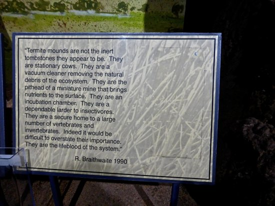 Window on the Wetlands Visitor Centre: Information about Trrmites