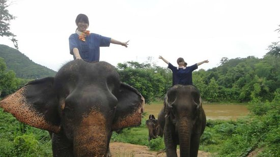 All Lao Elephant Camp - Day Tours: Happy Hour
