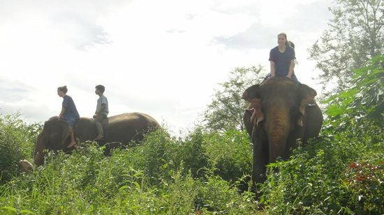 All Lao Elephant Camp - Day Tours: Turn around the camp