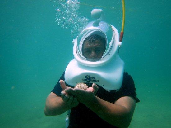 Aqua Adventure: .