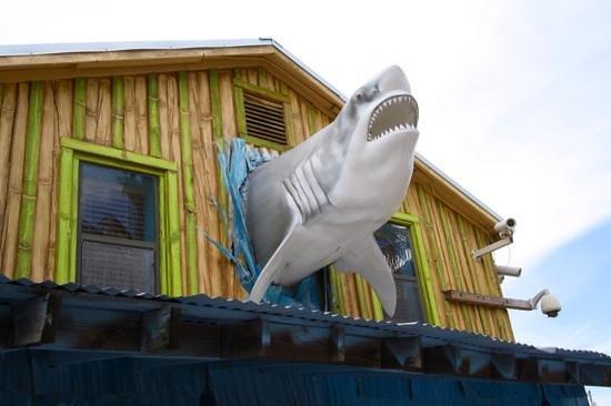 John's Pass Village and Boardwalk: Tourists beware of sharks