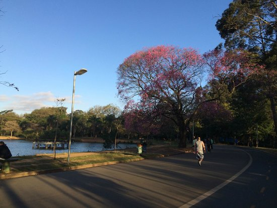 Ibirapuera Park: Late afternoon - Winter (August 2014)