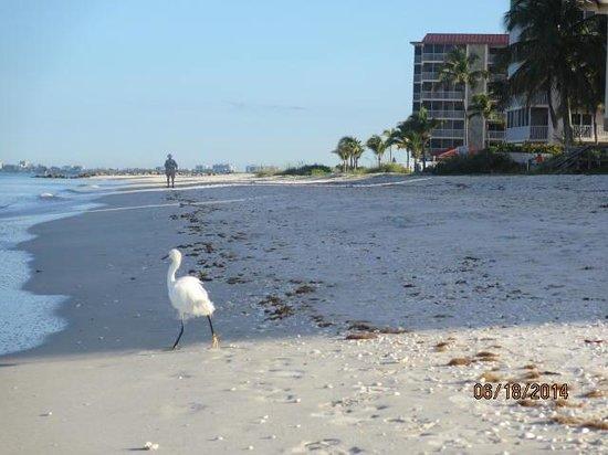 Bonita Beach Resort Motel: Relajante