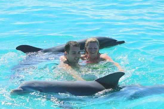 Dolphin Island : Momento impar durante o passeio.