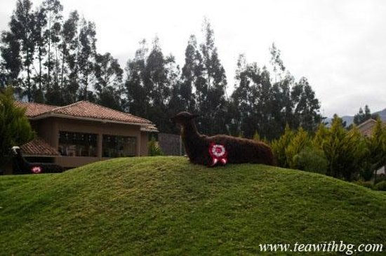 Aranwa Sacred Valley Hotel & Wellness: Llama chilling on hotel grounds