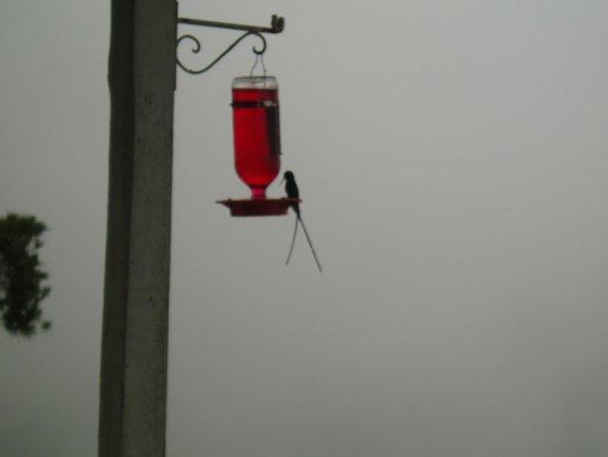 Strawberry Hill: Doctor Bird