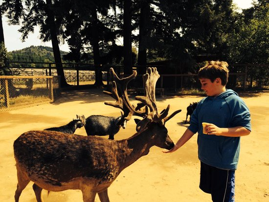 West Coast Game Park Safari: Feeding a reindeer