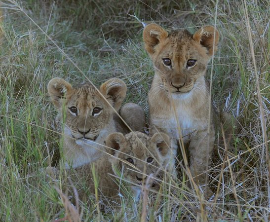 Camp Savuti: Cubs at home