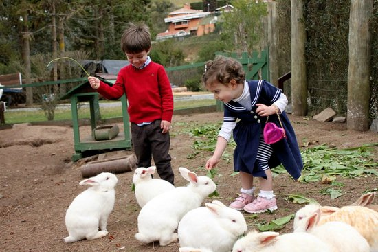 Hotel Vila Inglesa: Alimentando os coelhos