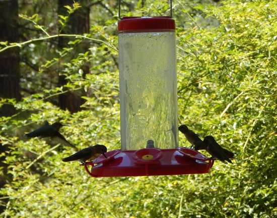 Blackberry Inn at Yosemite: Hummingbirds on the porch--a symbol of the Blackberry