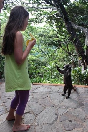 Rainbow Valley Lodge: les coatis sur la galerie !