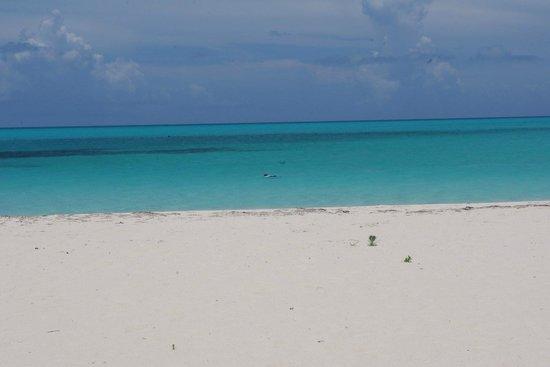 Shannas Cove Resort: beach
