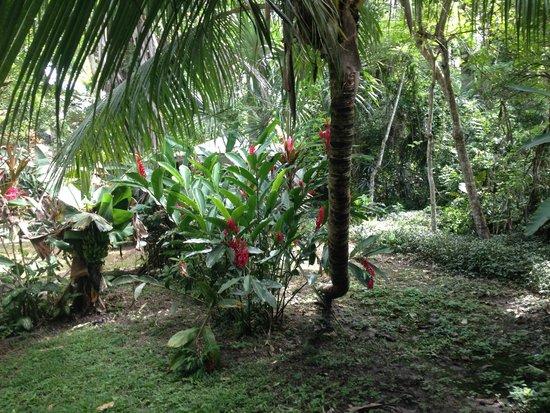 Hotel Jaguar Inn Tikal: View from porch hammock