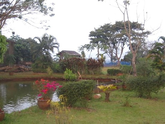 Golden Pine Resort : Un cadre enchanteur