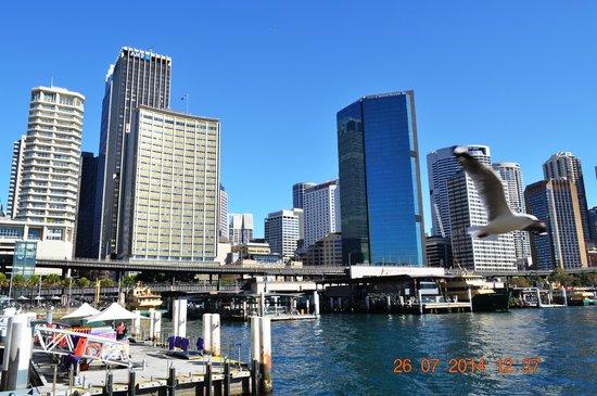 Sydney Harbour : Circular Quay