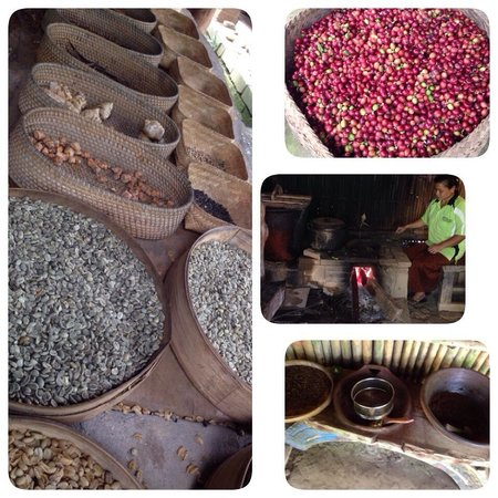 Bali Pulina Agro Tourism: The making of coffee