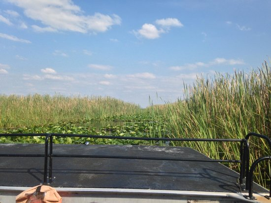 Boggy Creek Airboat Rides: Boat ride at boggy creek