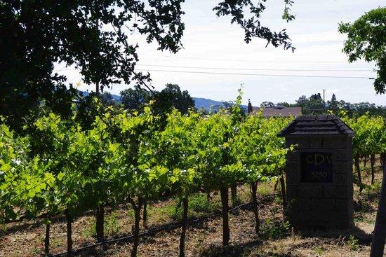 Chateau de Vie: the vineyards