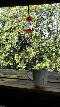 Wikiup Bed and Breakfast: so many humming birds
