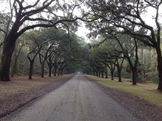 Wormsloe Historic Site: Approach