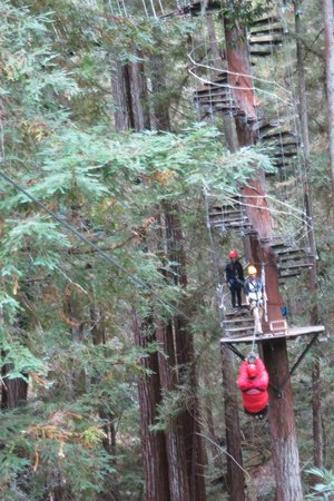 Sonoma Canopy Tours: loved that spiral staircase around the tree