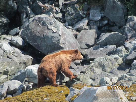 Glacier Bay National Park & Preserve: Bear  sighting!