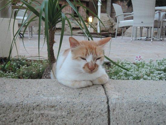 Golden Bay Beach Hotel: огромный кот шлялся на территории отеля