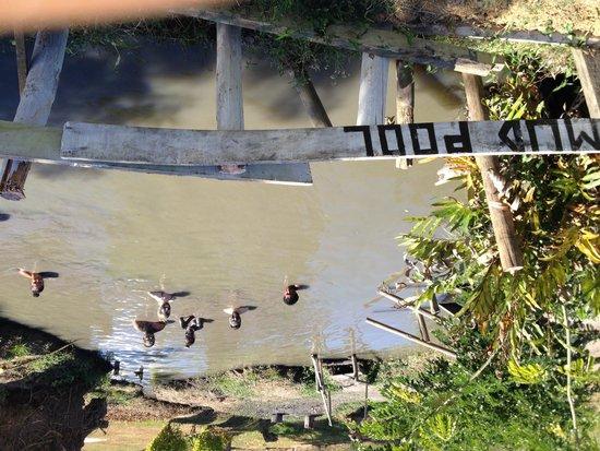Sabeto Hot Springs and Mud Pool: First mud pool