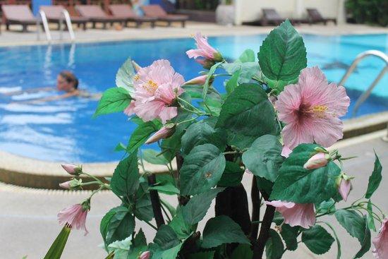 Asia Divers Resort : une madame dans la piscine
