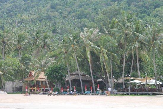 Asia Divers Resort : plage de sairee