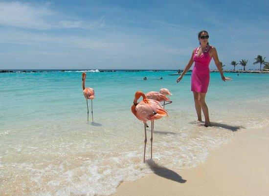 Renaissance Aruba Resort & Casino: Flamingos on the private beach