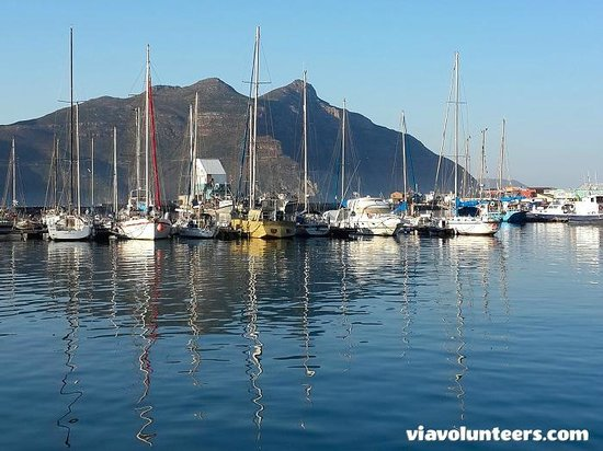 Baz Bus - Day Tours: Hout Bay Harbour