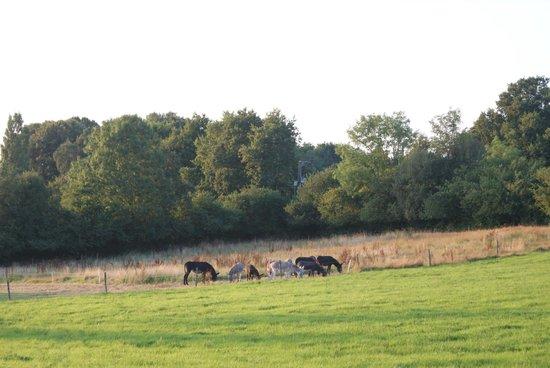 La Ferme des Anes : les ânes 2
